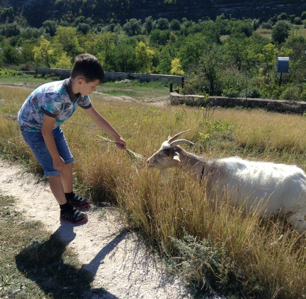 A boy and a goat