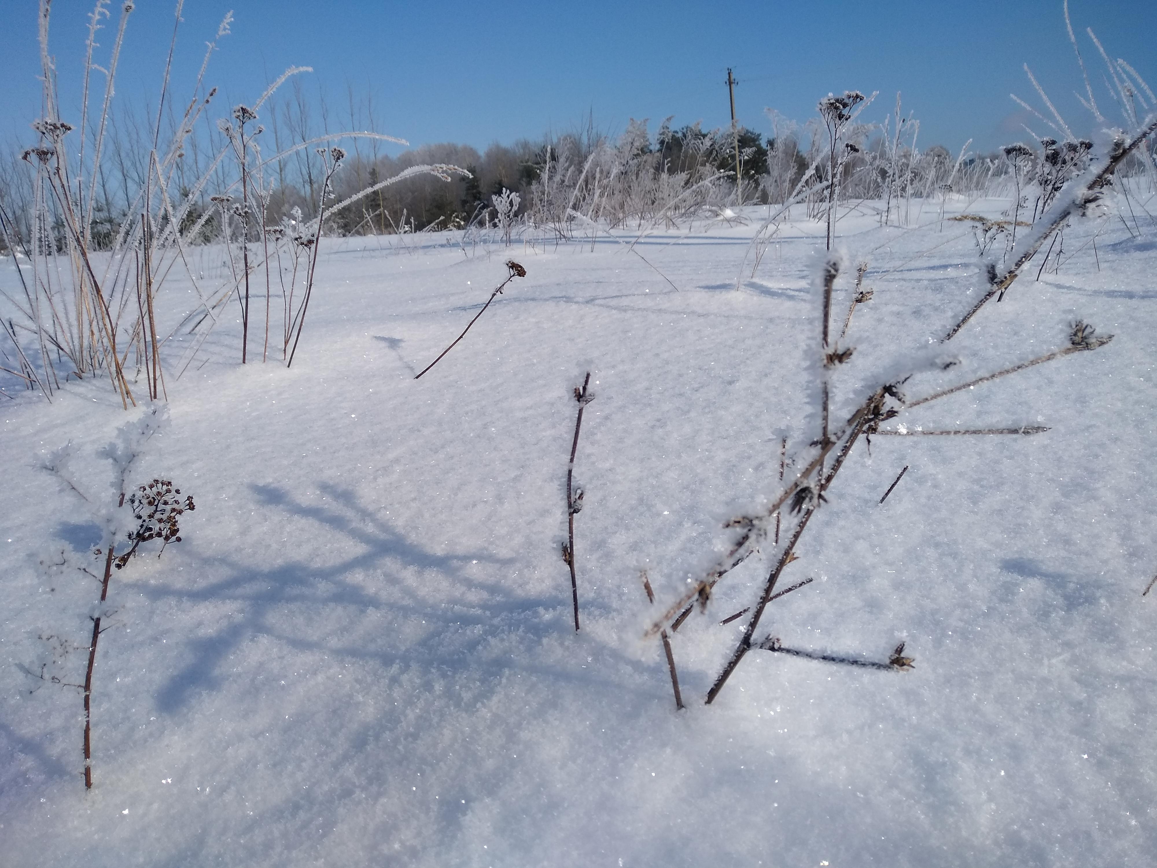 Nature resting under snow